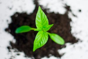 plant paprika pepper grow 82728 300x201 - Six steps to build a more resilient business